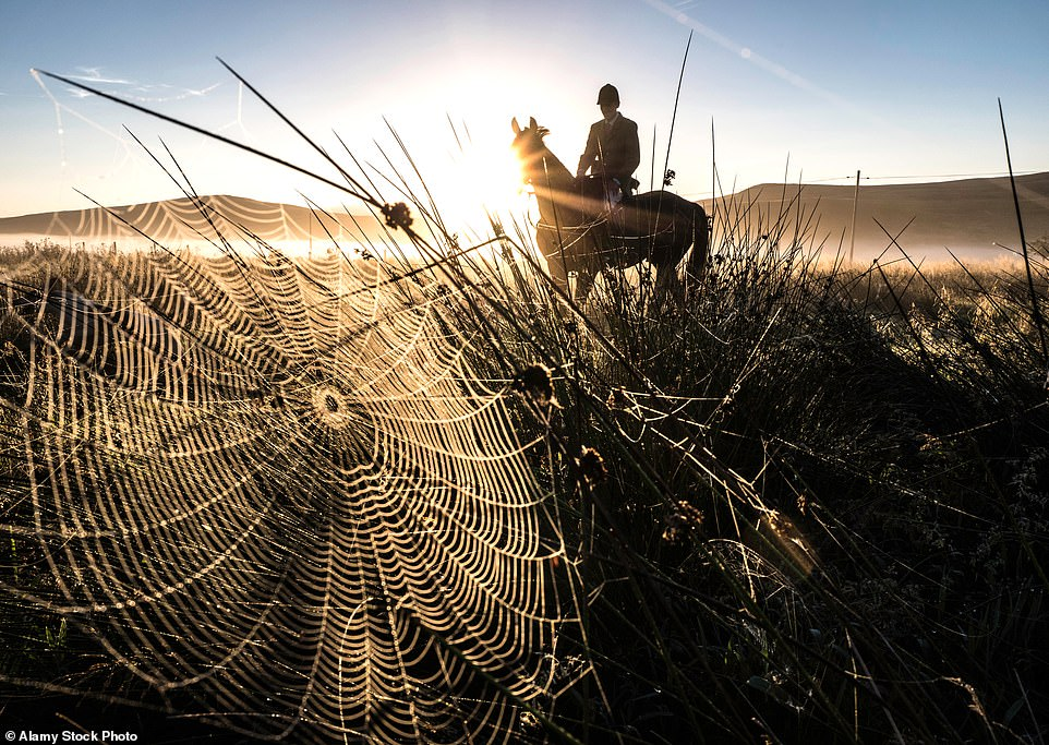 Now that's a web sight: Glossamer is the shining filaments spiders spin across the countryside and are usually best seen at dawn