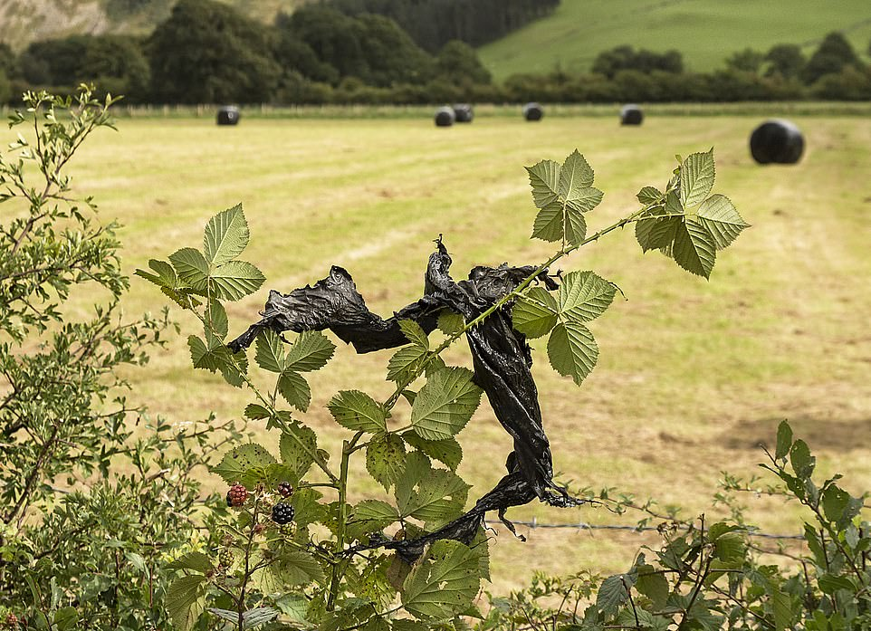 The modern curse: An Irish phrase for plastic caught in bushes — and we can all say knickers to that!