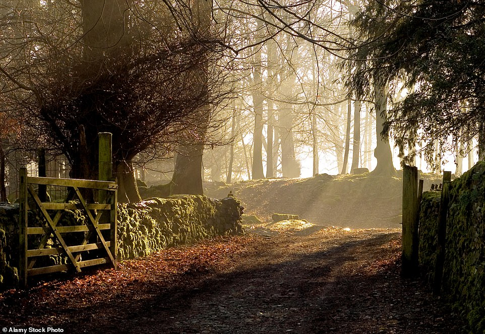 Lightbulb moment: Robert Macfarlane, who teaches English at Cambridge, has unearthed the perfect word to describe the bright shafts of sunshine that pierce a wood — shivelight