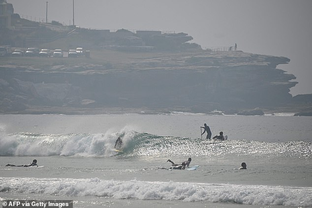 Bondi Beach (pictured today) was evacuated this morning after a huge great white was spotted in the shallows