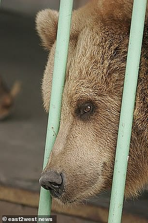 Katya the brown bear has been released from a prison in Kazakhstan after serving 15 years for two separate attacks on people causing actual bodily harm