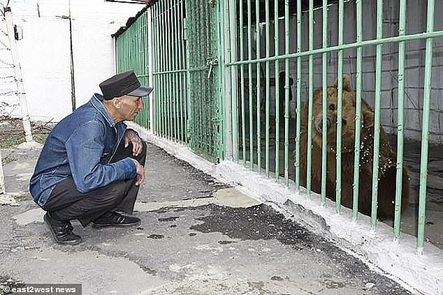A person perches on the ground and engages with Katya whose return to a mini-zoo has made another bear called Yashka 'very happy'. He greeted Katya with a hug, kiss and 'put his paw through [her] cage' as a warm welcome