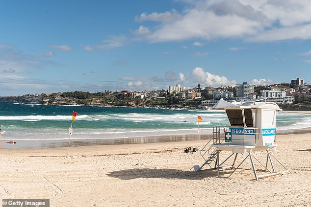 Two shearwaters are dead on the sand next to a lifeguard tower at Bondi Beach