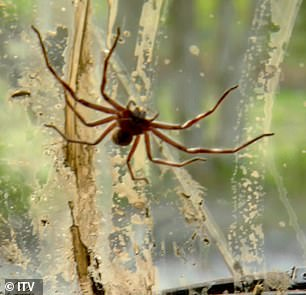 Unexpected passenger: 6ft4 rugby star James screamed in horror as he spotted the massive spider on the windscreen, with ex-footballer Ian, who was behind the wheel, darting out of the vehicle, followed by Kate, Andrew and Jacqueline