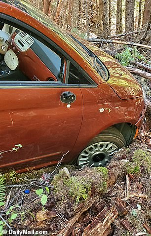 'I think he only managed to get up there because the car was small enough to get under the branches,' Hunter Jes Smith told DailyMailTV