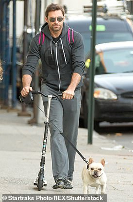 French bulldogs were the fourth most stolen dog, Hugh Jackman is pictured above with his dog