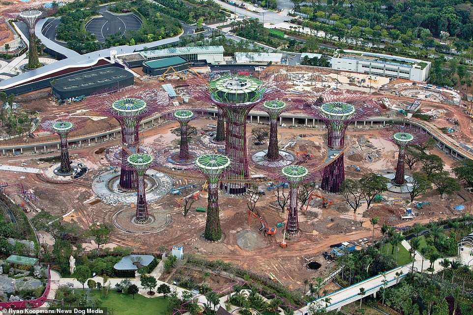 """Artificial """"supertrees"""" line Singapore's manmade marina, serving as vertical gardens, as it was under construction in 2011"""